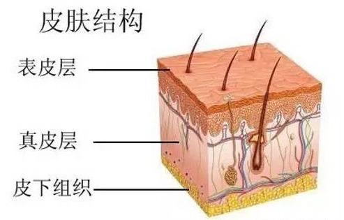 层等五层细胞结构